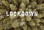 Rozzi x Phab - LockDown